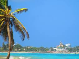 Caribbean, beach, palm tree, island